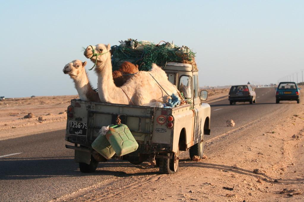 camel rover