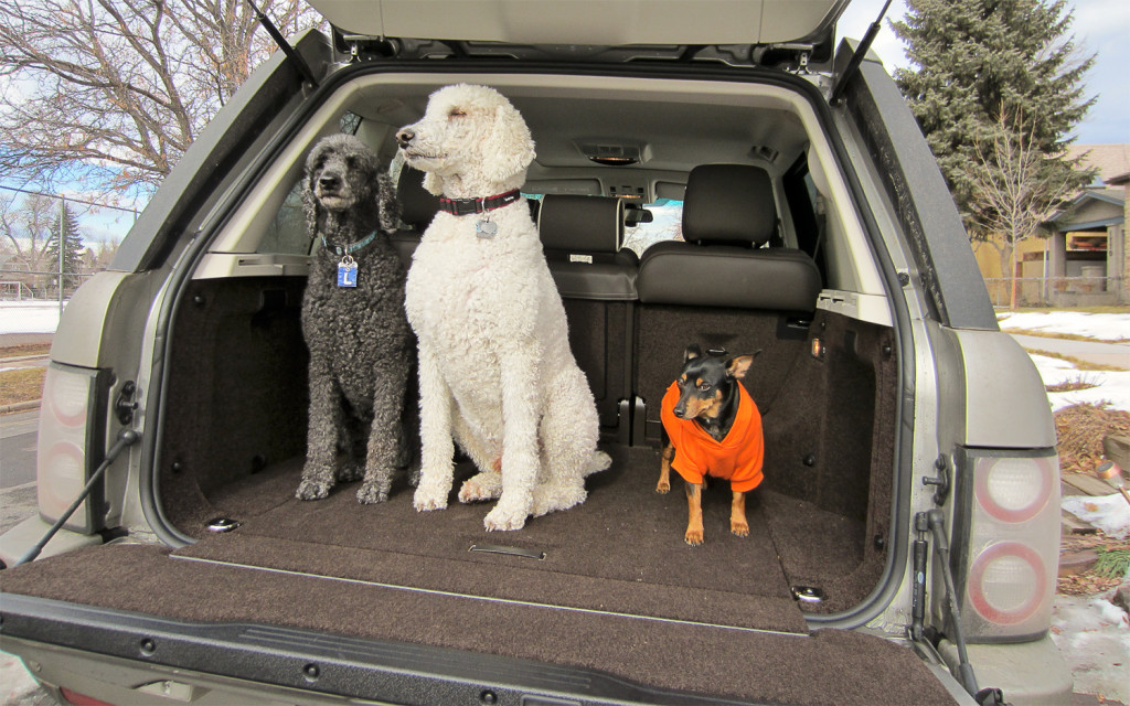 2012-land-rover-range-rover-supercharged-with-dogs-in-cargo-area